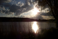 Sunsetting over Westport Lake (Matt Burke) Tags: sunset sun lake reflection tree water 2012 iphone westportlake wetport