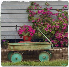 Lasting love (MissyPenny) Tags: flowers love vintage garden wagon charm explore charming decor shabbychic bristolpennsylvania kodakz990 ©pdlaich