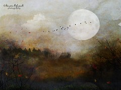 Deep in the woods (Kerstin Frank art) Tags: trees sky moon texture leaves birds clouds cottage kerstinfrankart kerstinfranktexture