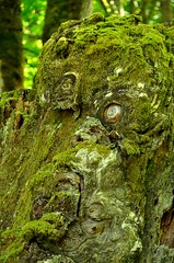 The Green Man (Helen Croy) Tags: man tree green woodland spirit