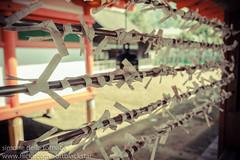 O-mikuji (Simone Della Fornace) Tags: japan paper japanese shrine miyajima itsukushimashrine wishes  shinto fortunes strips fortunetelling mikuji omikuji itsukushima  itsukushimajinja   paperstrips