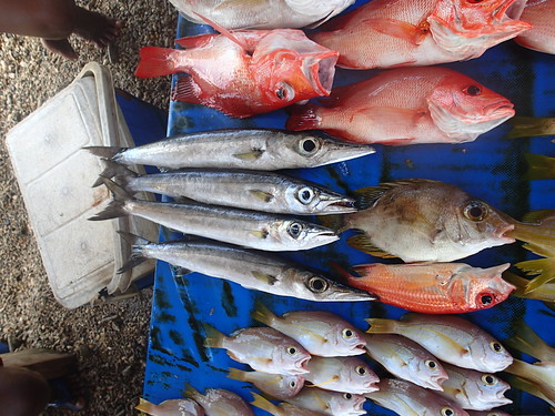 Fish trade, Honiara, Solomon Islands. Photo by Sharon Suri, 2013.