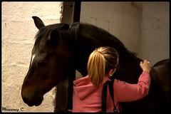 Osiris (Catherine Mnestrey) Tags: portrait horses cheval photographie naturelle poney equitation