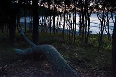 Coastal Forest (MrBlackSun) Tags: sunset dusk oz australia qld queensland noosa aussie noosaheads noosanationalpark
