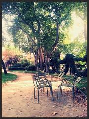 Silent dialogue (Giulia_) Tags: paris france plante jardin luxembourg arbre parc chaise platane sep13