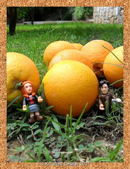 The Dr picking oranges in turkey
