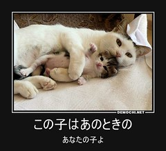 この子はあのときの あなたの子よ #子猫 #猫 #生まれたて (Demochi.Net) Tags: life cute sexy japan fun japanese motivator culture 日本 ペット 猫 demotivator 金 家族 結婚 ゲイ 女 子供 おっぱい 愛犬 政治 社会 巨乳 文化 眼鏡 教育 demotivators 経済 女性 初恋 r18 女子 カップル 子猫 女装 お笑い motivators 会社 少子化 企業 ユーモア 恋 悪い 格差 風刺 一言 デモチ 大喜利