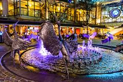 _DSC8661 (Abiola_Lapite) Tags: travel night spring sydney australia australien nikkor d800 cocklebaywharf シドニー オーストラリア iso4500