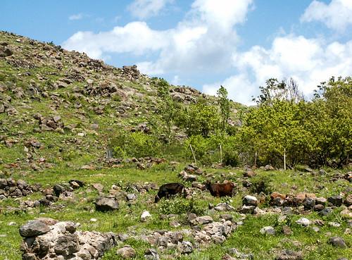 Kosh village, Armenia