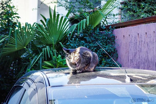 Today's Cat@2013-11-24