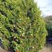 Trees_of_Loop_360_2013_055