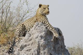 Botswana Okavango Delta Photo Safari 70