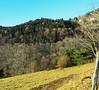 au dessus de MUNSTER  62  les VOSGES,  Beaute et Paysages de notre belle France, Guy Peinturier (GUY PEINTURIER) Tags: vairessurmarne beautedefrance guypeinturier bellefrance paysagesdefrance peinturierguy