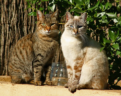 Gatos (vic_206) Tags: cats gatos canoneosdigitalrebelxti