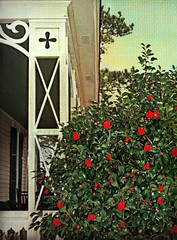 Red Camellias and Fancy Porch Posts:  Adelphia Plantation, Edgecombe County, North Carolina (EdgecombePlanter) Tags: old flowers winter red nc northcarolina historic carolina huge camellia antebellum bold ruffled redcamellia
