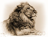 The King Rests (Jeff Clow) Tags: king lion malelion kingofthejungle kingofthedesert ©jeffrclow