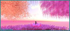 Douceur colorée (Tim Deschanel) Tags: life pink orange sun color rose japan landscape island soleil tim ile sl second tempura paysage nénuphar arbre japon couleur deschanel