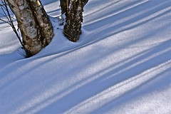 cool lines (heatherybee) Tags: winter snow nature stjohns birch february lightshadow sparkling slope wintersun treetrunks bowringpark shallows sunstreaks newfoundlandandlabrador sonyrx100ll