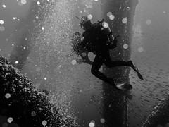 Oil Rig Dive - Los Angeles (Michael Bartosek) Tags: blackandwhite digital photography michael diving underwaterphotography canong11 bartosek canonwpdc34housing