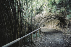 Bamboo arch of mystery (eraplatonico) Tags: wedding 120 mystery garden japanese arch kodak traditional bamboo 100mm 400 yokohama portra iis plaubel makina sankeien f29 anticomar