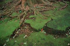陽明山_22 (Taiwan's Riccardo) Tags: color 35mm nikon taiwan rangefinder transparency fujifilm fixed nikkor f18 s3 陽明山 台北市 rdpiii nikonlens 2013 135film
