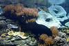 Bassin polynésien (1) (Mhln) Tags: paris aquarium requin poisson trocadero poissons meduse 2015 cineaqua