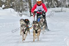 _DSC8232 copia (JoanEnric) Tags: dog musher mushing sled sleddog traineau valgaudemar valgaude valgaudetraineau