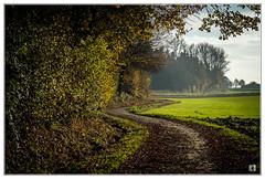 (lotl.axo) Tags: autumn trees winter nature landscape herbst natur landschaft bäume culturallandscape kulturlandschaft