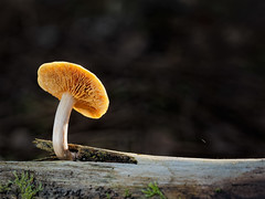 Light up! (Nicolas Winspeare) Tags: world france macro nature closeup photography close angle bokeh wildlife olympus 60mm delicate lemans macrophotography m43 mft primelens bestcamera mircofourthird omdem5 nicolaswinspeare