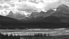 Saskatchewan River (dbonny) Tags: canada mountains river rockies alberta banff rockymountains northsaskatchewanriver banffnationalpark northsaskatchewan saskatchewanriver icefieldsparkway canadianrockies banffnp albertacanda