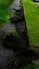 Lawn Edging (dax46407) Tags: overgrown grass lawn edge garyindiana rx100