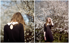 Blossoms (Kenneth Ipcress) Tags: diptych blossoms poland joanna gdansk largeformat aeroektar
