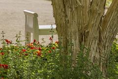 Bench in the Botanical Gardens, Munich (suzanne.gibson) Tags: flower bench outdoor botanicalgarden