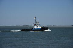 Smit Hudson (larry_antwerp) Tags: netherlands ship nederland vessel tug schelde  sleepboot schip       walsoorden       smithudson 9402421