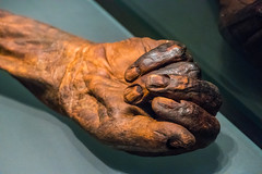 Oldcroghan Man's Right Hand (Serendigity) Tags: ireland dublin archaeology museum