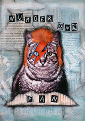 Bowie Fan (Hypnocatsss) Tags: collage cat bowie mixedmedia