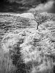 Mennock Wood_4 (Dylan Nardini) Tags: uk trees light sky nature lines clouds ir scotland countryside sanquar infrared shape mennock