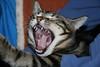 lasciami dormire (Lina Prema Polmonari) Tags: gatto nero micio tigrato
