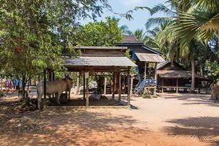 angkor - cambodge 2016 81