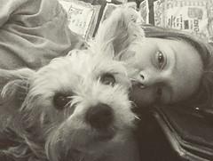 Doggie Cuddles (shutterbugluv88) Tags: pet love yorkie
