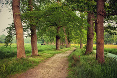 Vennebroek | Paterswolde, the Netherlands (frata60) Tags: trees tree netherlands landscape bomen nikon path nederland wideangle tokina d200 bos 1224mm drenthe paterswolde landschap vennebroek groothoek bospad