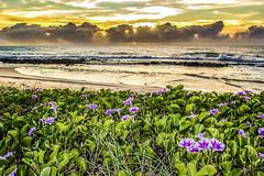 Dawn with flowers (rqserra) Tags: morning brazil flores praia brasil clouds strand landscape dawn agua waves alba playa paisagem amanecer aurora nuvens dawning plage amanhecer reefs aube alvorecer morgendmmerung arrecifes dageraad daggry gryning paccbet rqserra