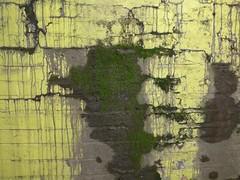 Moss (moley75) Tags: black london yellow wall moss bricks tunnel drips railwayline southall dripping ealing westlondon gladelane