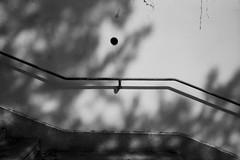 Descente infernale du nombre de paradis perdus (Paysage du temps) Tags: fp4 film ilford leicam6