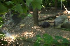 IMG_3566 (neatnessdotcom) Tags: new york city canon eos rebel zoo bronx ii di tamron vc 2016 550d f3563 t2i pzd 18270mm
