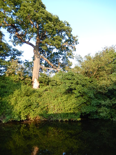 Trees on the river Dee, 2016 Jun 05 -- photo 15