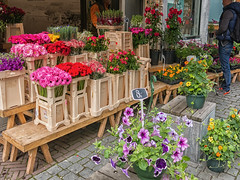 flowers for sale (maryannenelson) Tags: flowers summer people netherlands shop store outdoor florist