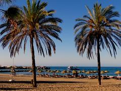 Palmeras (camus agp) Tags: espaa panasonic marbella temprano marmediterraneo fz150