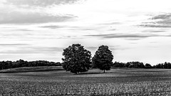 IMG_9805-Edit (VNR Photography) Tags: old trees sky blackandwhite bw ontario canada tree monochrome clouds canon fence countryside afternoon farm country canadian countryroad fenceline oldfence caledon vnr andrevonnickisch vnrphotography avnrphotogmailcom httpswwwfacebookcomavnrphotographyrefhl canonbringit