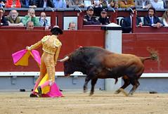 Roca Rey, Las Ventas (Fotomondeo) Tags: bull bullfighter toros bullfight toro matador torero sanisidro plazadetoros corridadetoros lasventas rocarey